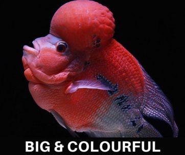 aquariumfishindia