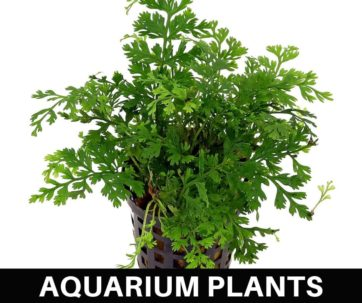 AquariumPlants